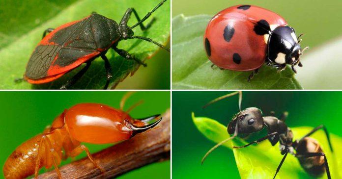 Más de la mitad de las especies de insectos podrían desaparecer