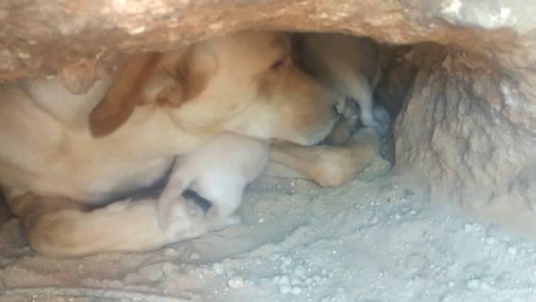 VIDEO: Hombres entierran a 9 cachorros vivos y causan indignación