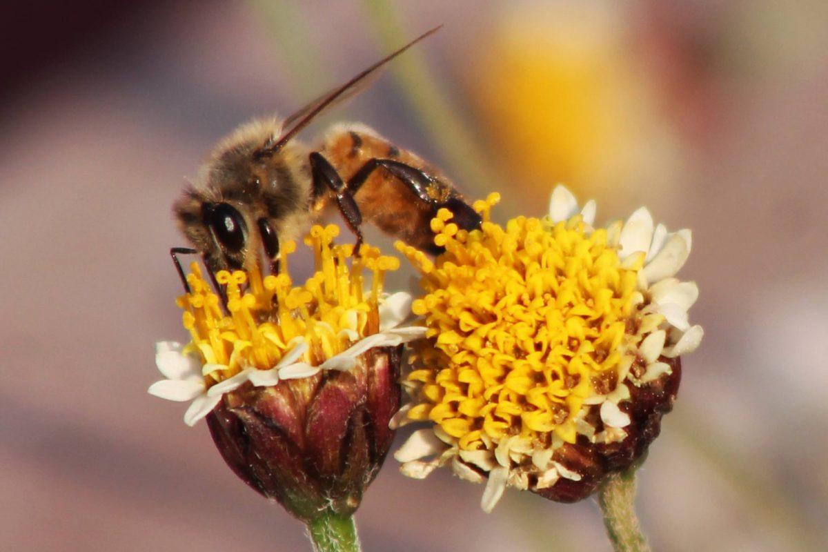 Datos que no sabías sobre las abejas